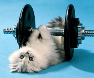 1275450621_1024x768_funny-kitten-lifting-weights