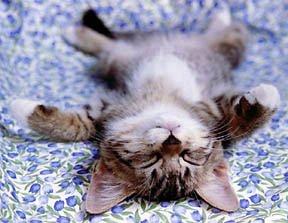 cat sprawled out sleeping