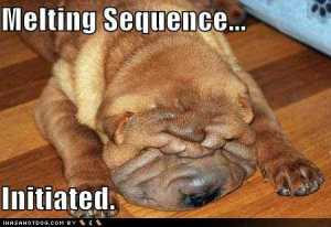 funny_dogTOO_HOT_pictures_dog_melting_sequence_initiated