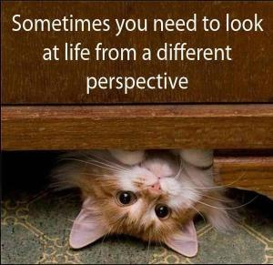 sometimes-you-need-to-look-at-life-from-a-different-perspective